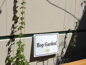 Their patio Hop Garden