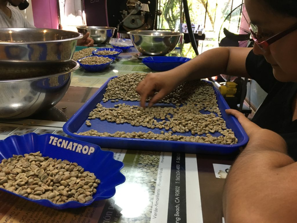 Sorting out the coffee beans